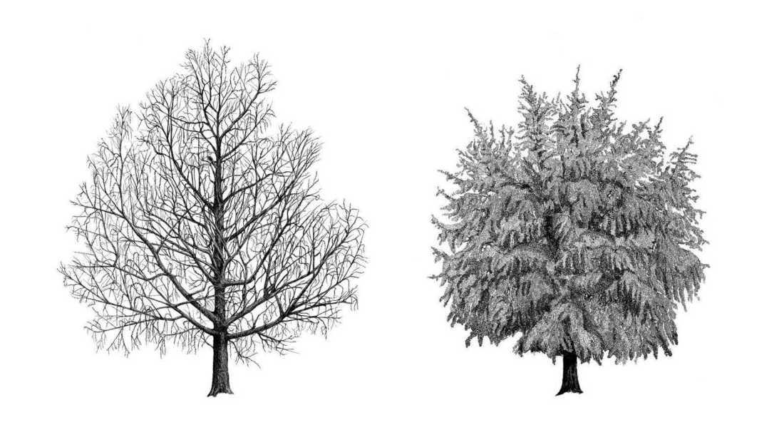 architecture des arbres Fondation Cartier